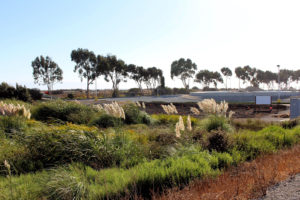The Oro Loma horizontal levee, a constructed wetland built to address future sea level rise.
